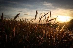 wheat gluten fear