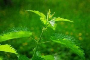 plant anti nutrients don't eat plants
