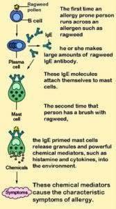 Mast_cells